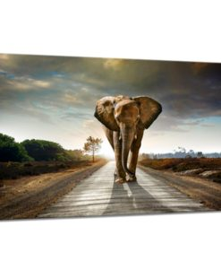 31275-Canvas-75x100-Elephant