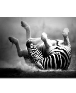 31305-Canvas-75x100-Zebra
