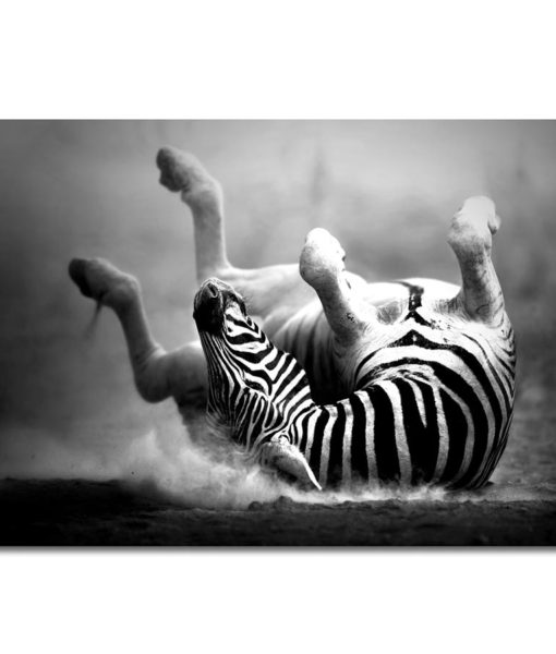 31305-Canvas-75×100-Zebra